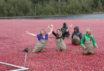My First Cranberry Harvest at Pine Barrens Native Fruits (and Contest!)
